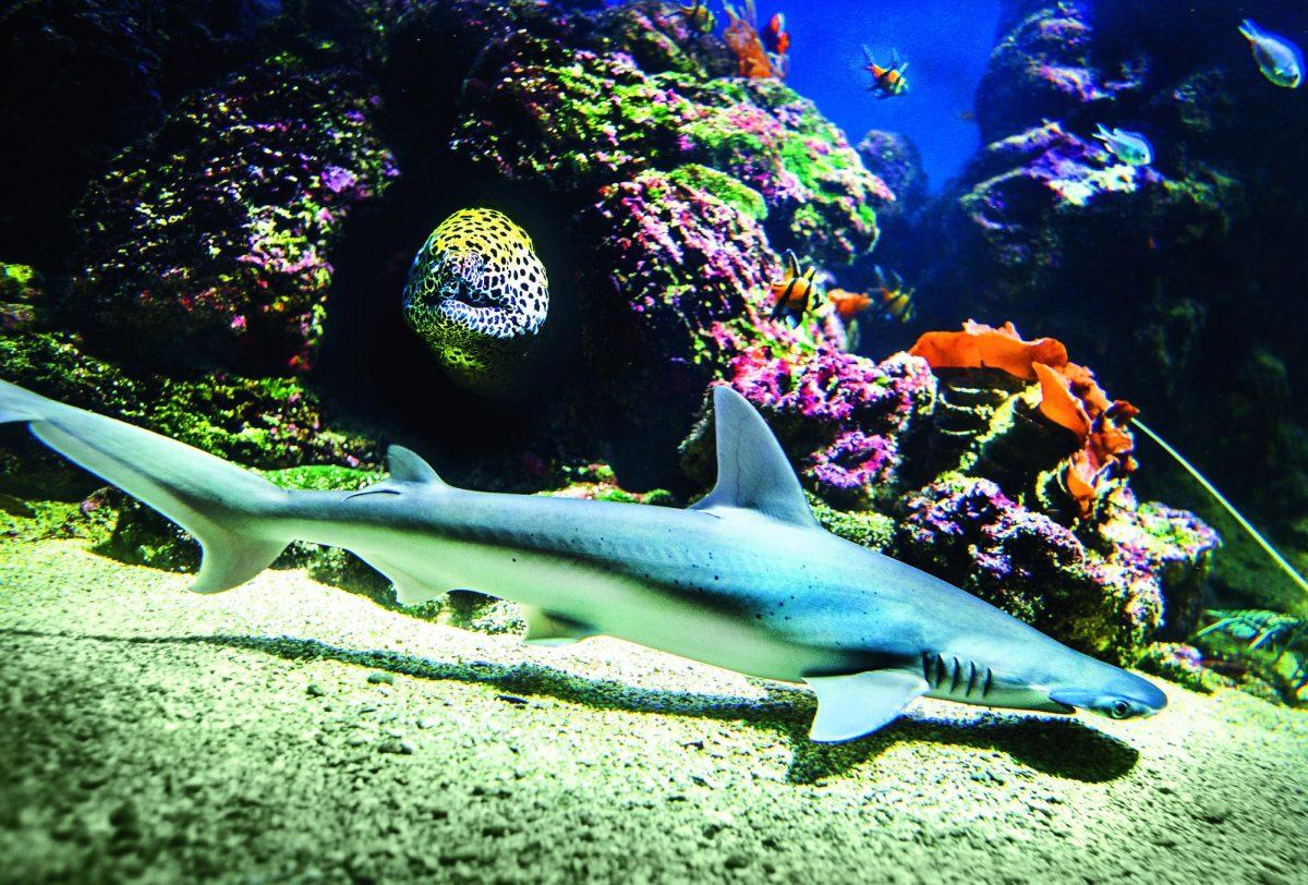 Mares tropicales en Aquaria, el museo de Estocolmo <br> Foto: aquaria.se