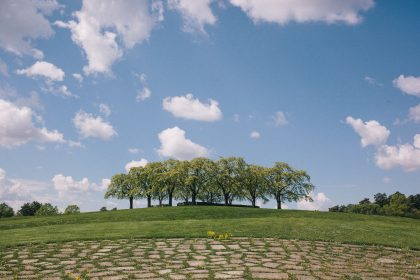 Paisajes del cementerio del bosque Foto: Mikael Almehag/Stadsmuseet 2014