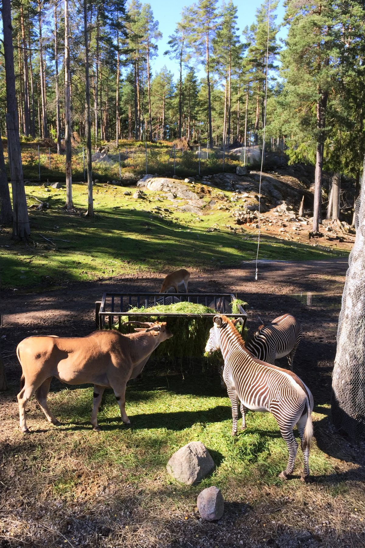 Animales en el zoo de Kolmården, Suecia <br> Foto: Israel Úbeda / sweetsweden.com