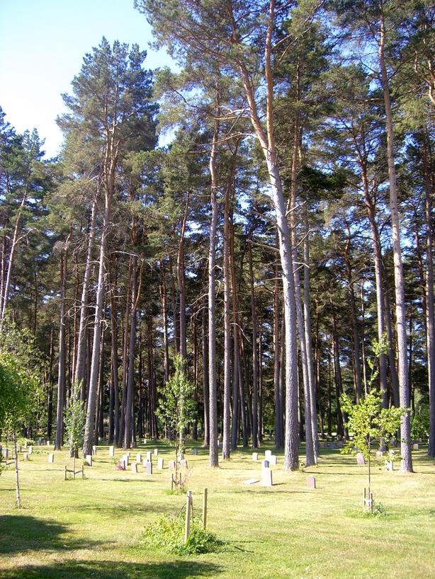 Detalle de tumbas y árboles <br> Foto: Israel Úbeda / sweetsweden.com