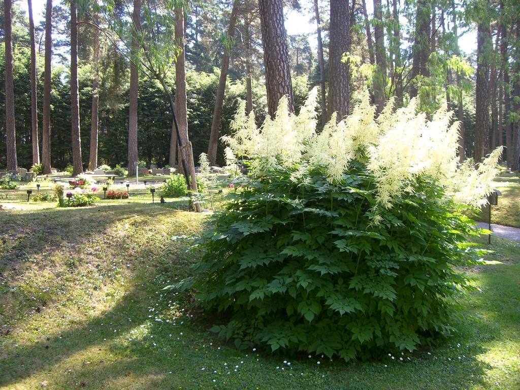 Detalle de plantas y tumbas <br> Foto: Israel Úbeda / sweetsweden.com