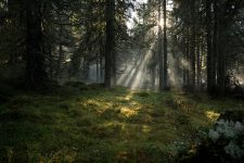 Bosque sueco en Båtstadsknallen, Värmland
