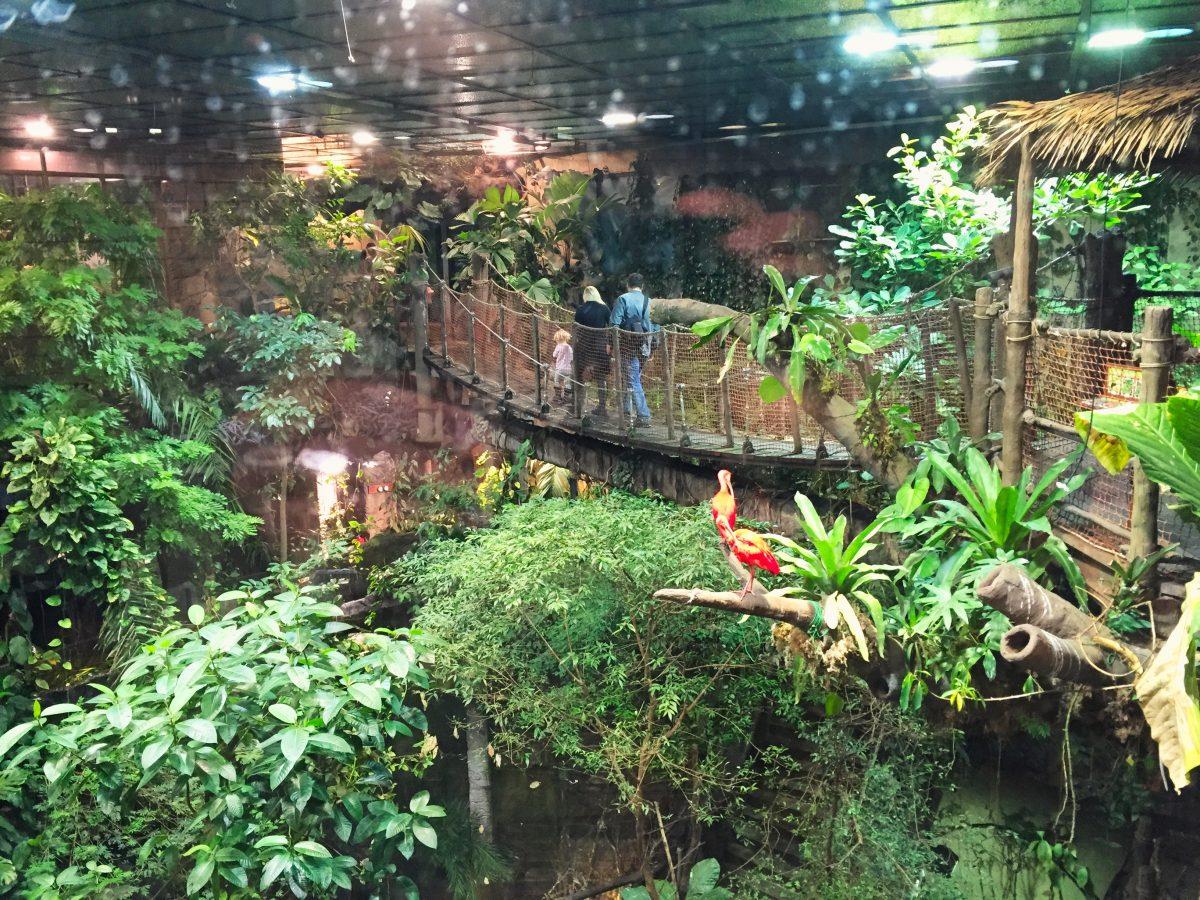 Selva amazónica en el interior del Universeum de Gotemburgo <br> Foto: Israel Úbeda / sweetsweden.com