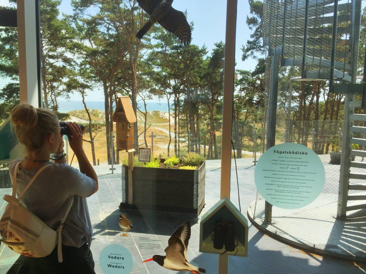 Divisando pájaros en el sur de Escania <br> Foto: Israel Úbeda / sweetsweden.com