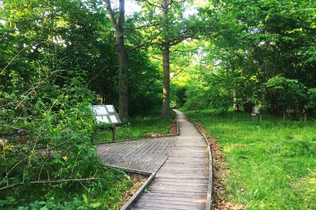 Paseando por el bosque en Ekerum, Öland <br> Foto: Israel Úbeda / sweetsweden.com