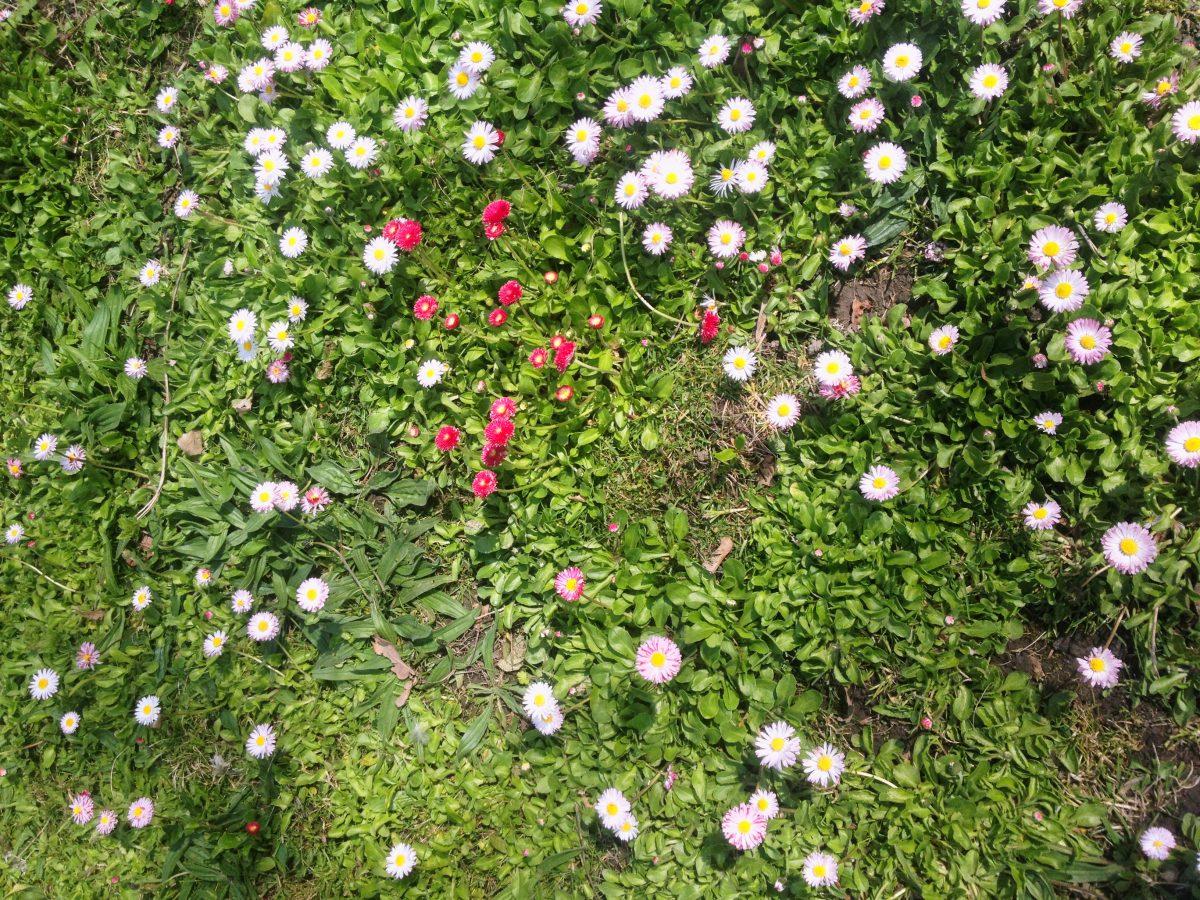Naturaleza en las Fjäderholmarna <br> Foto: Israel Úbeda / sweetsweden.com