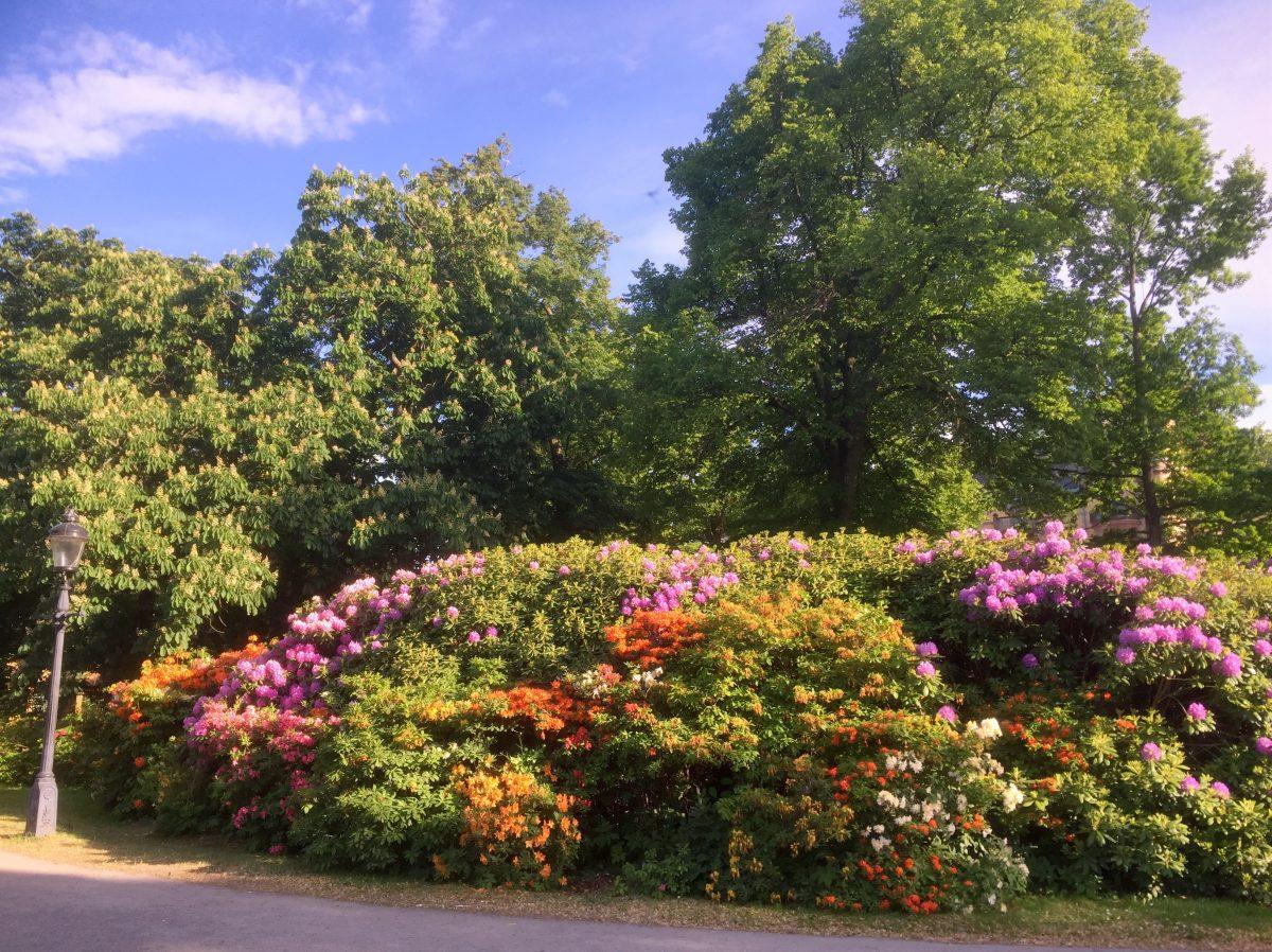 Flores en verano en Djurgården, Estocolmo <br> Foto: Israel Úbeda / sweetsweden.com