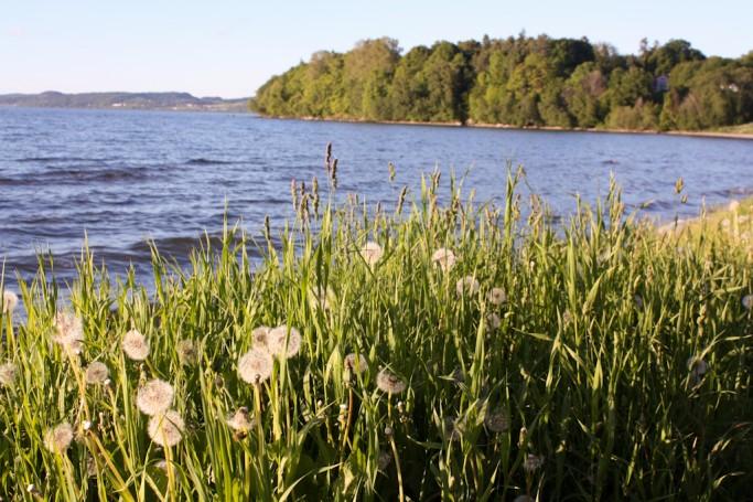 Flores y vegetación junto al lago Vättern en Jönköping, Småland, Suecia - foto: Israel Úbeda
