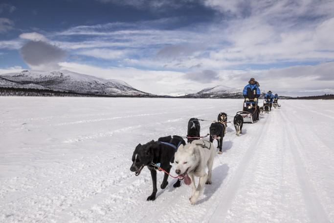 Trineos tirados por huskies en la Fjällraven Polar