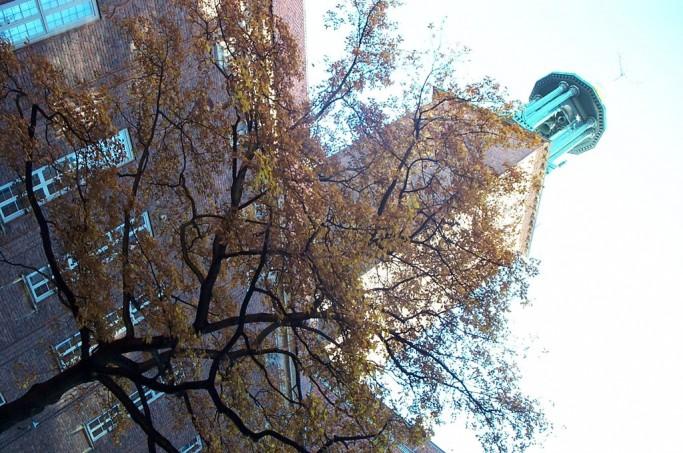 Torre del Ayuntamiento de Estocolmo y árbol, foto: Israel Úbeda