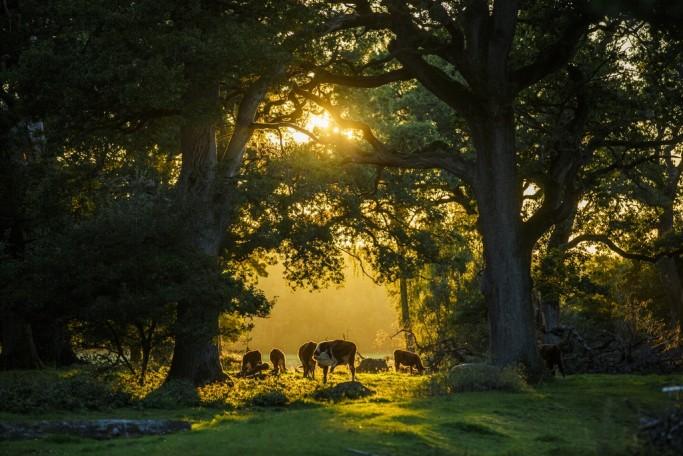 Paisajes del parque nacional de Söderåsen en Suecia - Foto: Familjen Helsingborg