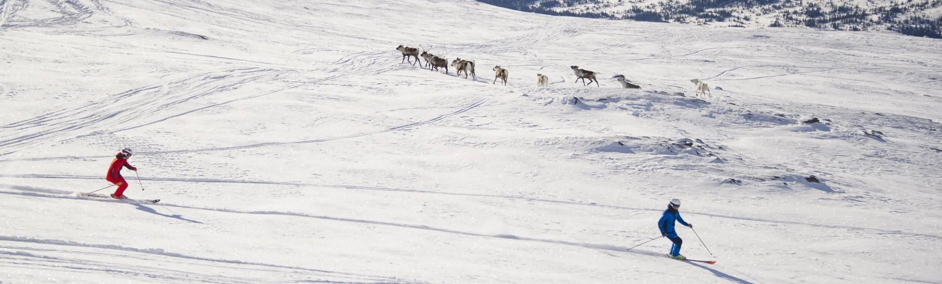 Accomodation Offer: Book Your Ski Holidays in Åre