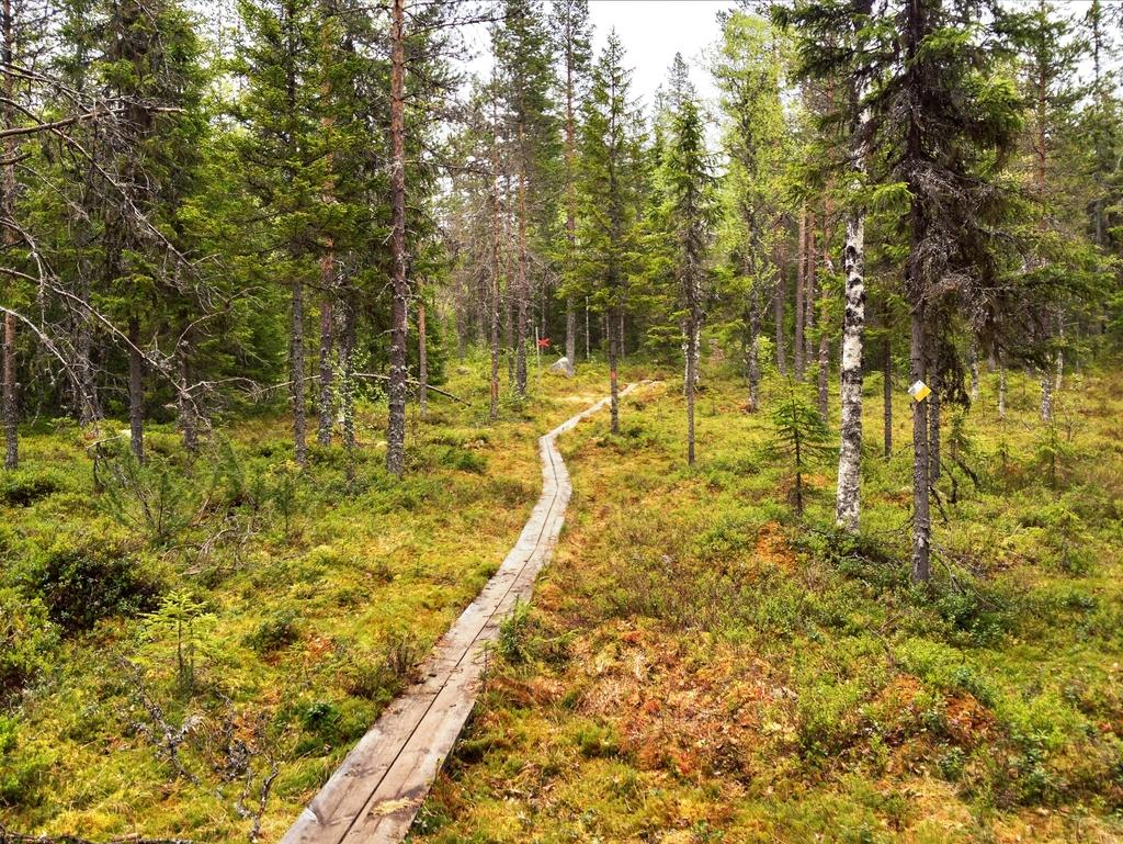 Sendero hecho a base de tablones situado en medio del bosque <br>Foto: Israel Úbeda