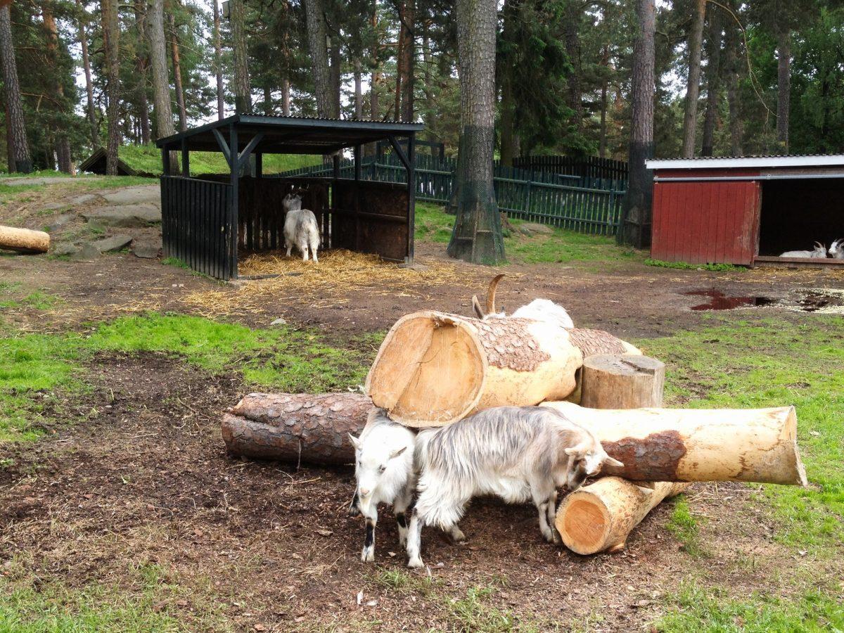 Lillskogen, el bosque para los más pequeños <br> Foto: Israel Úbeda / sweetsweden.com