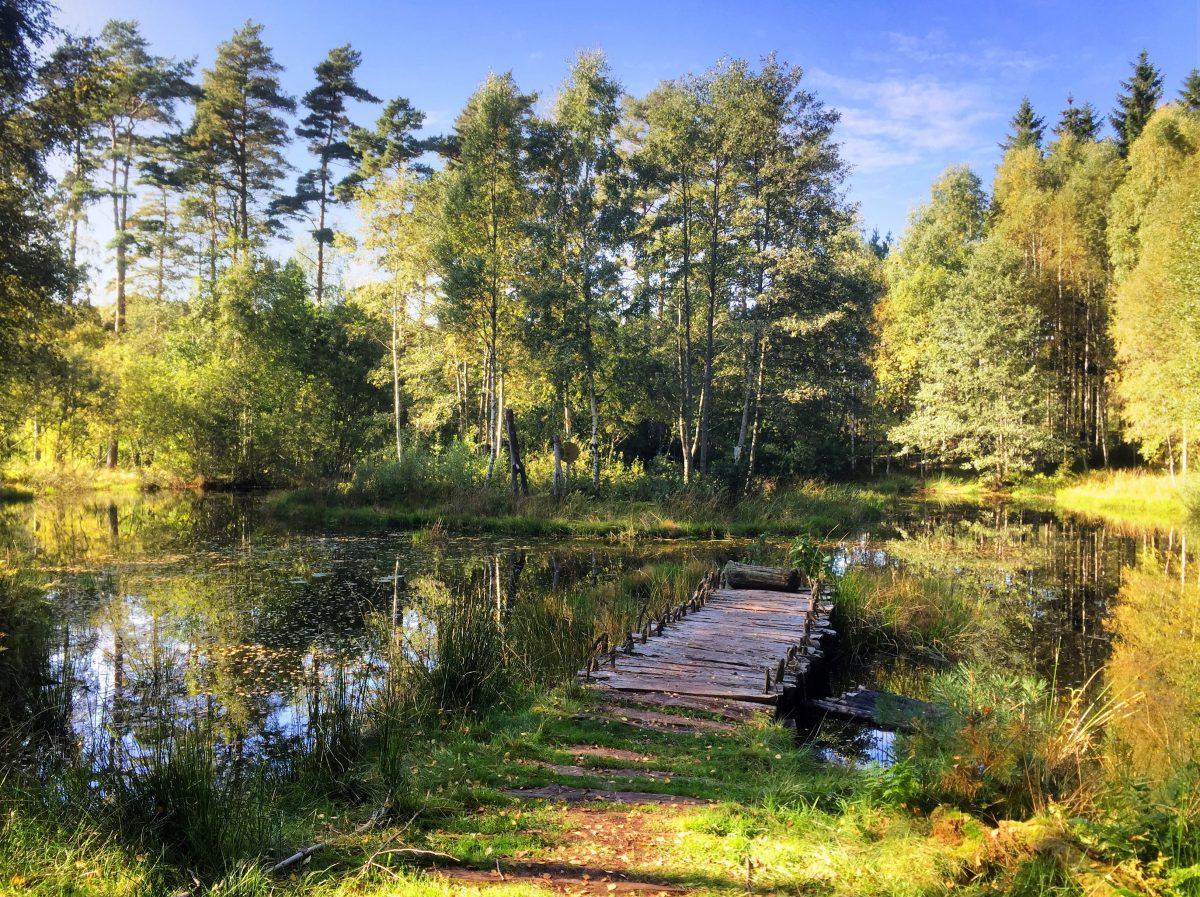 Paisaje natural en los alrededores de Vitlycke Suecia <br> Foto: Israel Ubeda / sweetsweden.com