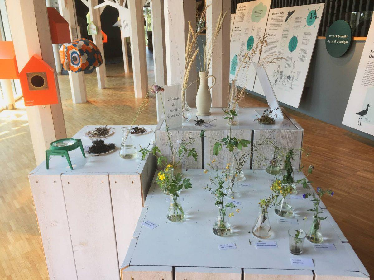 Exposición de plantas en Naturum Falsterbo <br> Foto: Israel Úbeda / sweetsweden.com