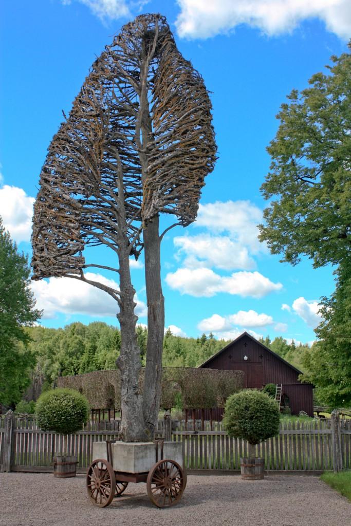 Árbol cuyas ramas han sido colocadas a mano por Tage Andersen en Gunillaberg, foto: Israel Úbeda