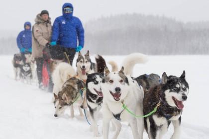 Trineo tirado por perros en Laponia sueca - Foto: Ted Logart / visitskellefteå.se