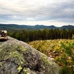 Botas de trekking en paisaje de Långberget, Värmland, Suecia; foto: Israel Úbeda