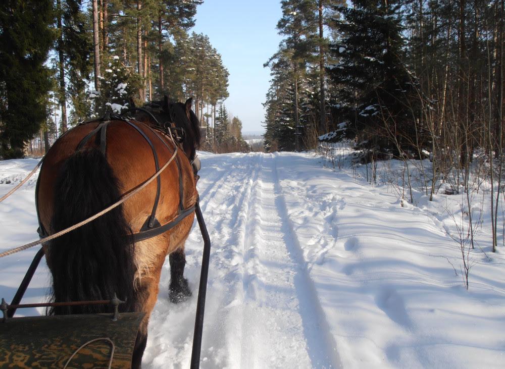 Excursiones a caballo en invierno en Suecia