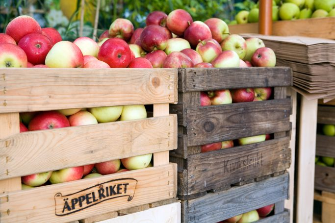 El reino de las manzanas en Escania - Foto: Miriam Preis / imagebank.sweden.se