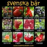 Bayas suecas / svenska bär